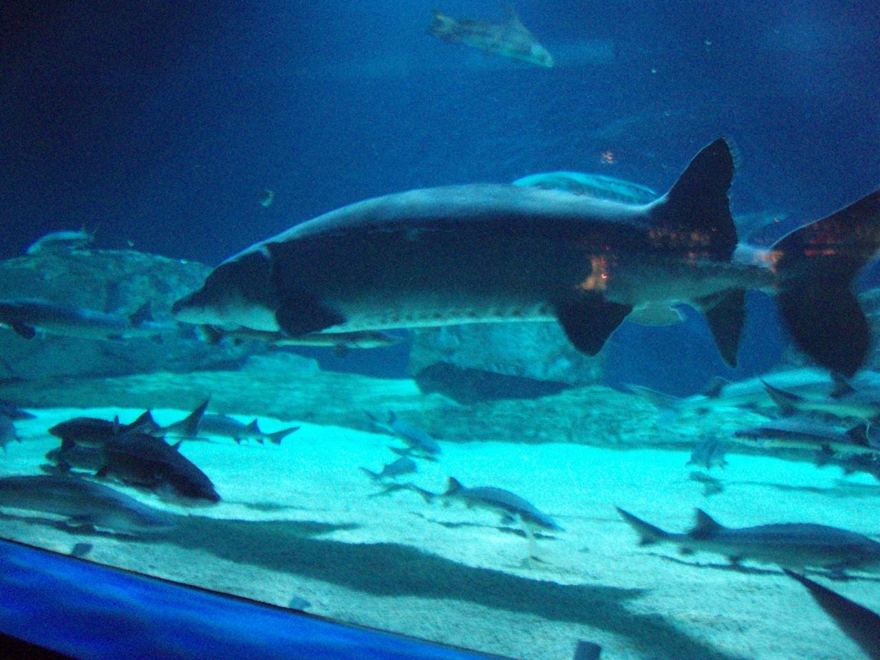 壁纸 海底 海底世界 海洋馆 水族馆 1279_959