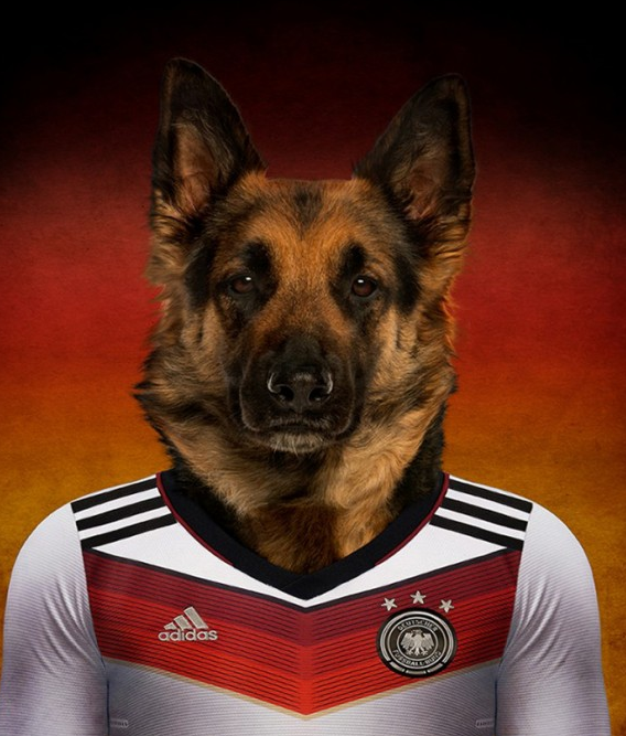 动物摄影-狗狗足球先生