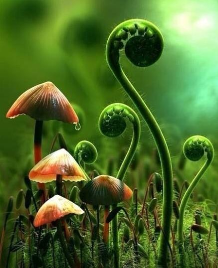 色彩斑斓的蘑菇简直就是艺术品