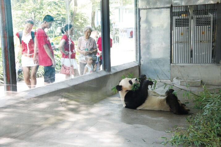 """市民们正在动物园观看大熊猫。   随着气温入伏天的到来,市民普遍反映这天气仿佛已经进入了""""烧烤 """"模式,而我们的国宝熊猫""""希望"""",第一次来到宜昌,是否能适应这""""火辣辣""""的天气呢?昨日,记者来到儿童公园动物园,为大家一探究竟。   记者易玮玮 通讯员王安定报道:中午时分,不少放了暑假的小朋友们在家长的带领下前去观看大熊猫""""希望"""",因为太热,""""希望""""便乖乖呆在它的空调玻璃房里来回踱步,"""