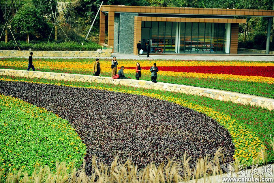 公园彩叶植物效果图