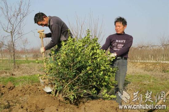 种树什么时候开始